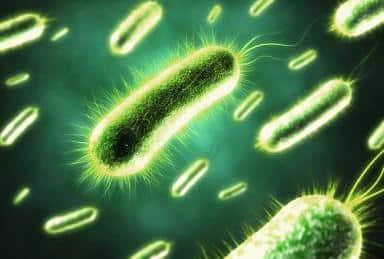 E. coli multi resistante